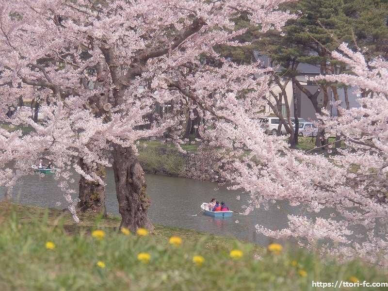 五稜郭公園の桜とボート
