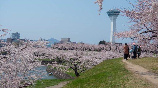 桜越しの五稜郭タワー
