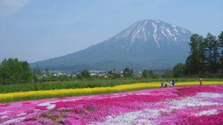 芝桜越しの羊蹄山