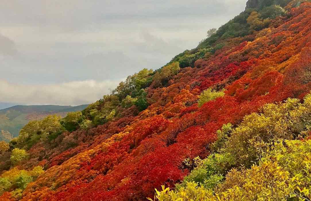 黒岳の紅葉